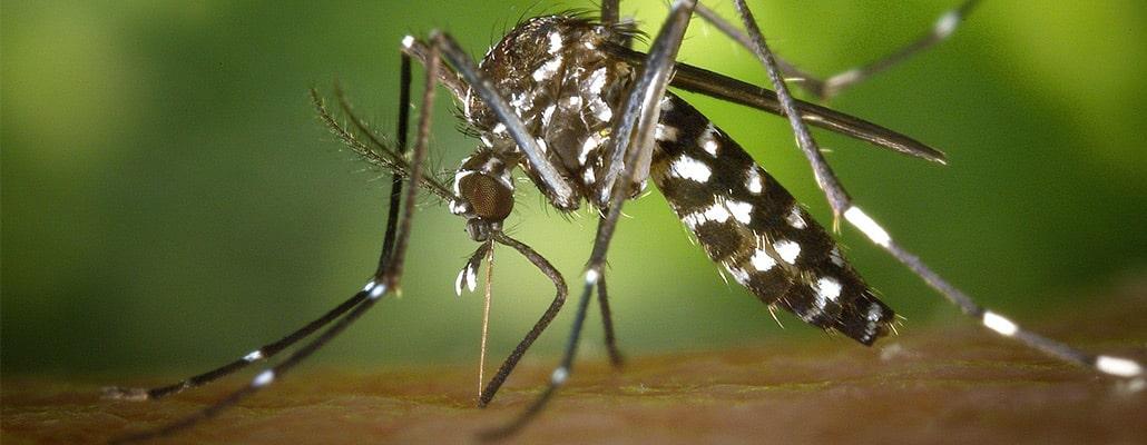 Faire face au moustique tigre : vos témoignages | 4 saisons n°248 4