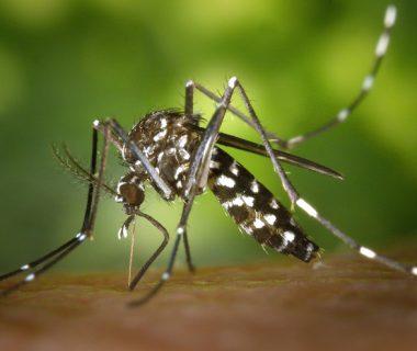 Faire face au moustique tigre : vos témoignages | 4 saisons n°248 5