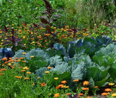 Dévoilez votre jardin secret grâce au concours national des jardins potagers