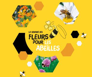 Des fleurs pour les abeilles : semez des graines en juin pour aider les pollinisateurs ! 1