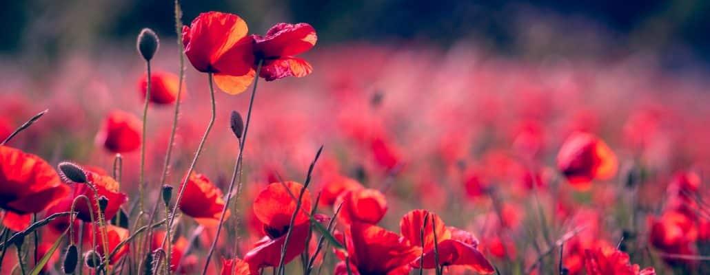 Écrivez votre plus bel article sur les herbes folles pour Tela Botanica