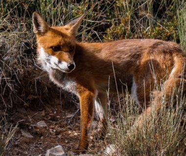 Une pétition pour sauver les animaux considérés comme nuisibles par la loi 1