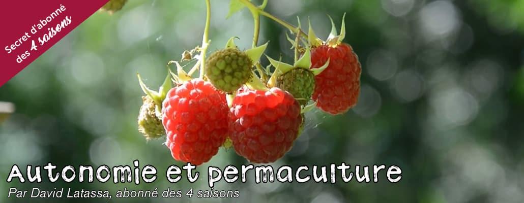 Baies et petits fruits gourmands 1