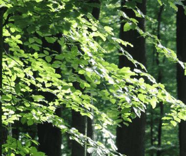 La réserve du Chapitre-Petit Buëch désormais patrimoine mondial de l'Unesco