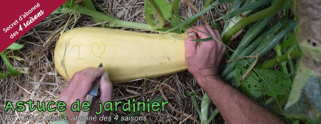 Personnaliser ses courges 2