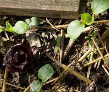 Appel à témoignages : plantules du printemps, on enlève ou on laisse pousser ? 1