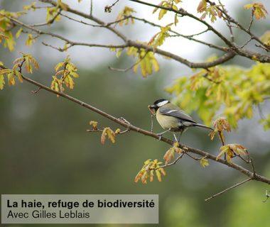 Conférence : La haie, refuge de biodiversité, le 25 novembre 2021   Grenoble (38)