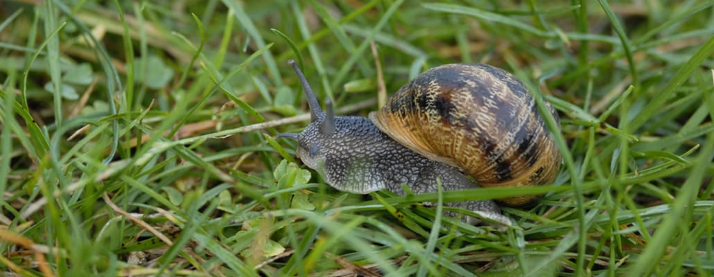 Reconnaître les escargots   4 saisons n°250 1
