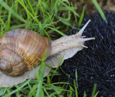 Reconnaître les escargots | 4 saisons n°250