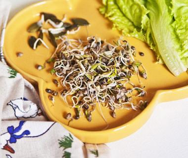 Recettes à base de graines germées